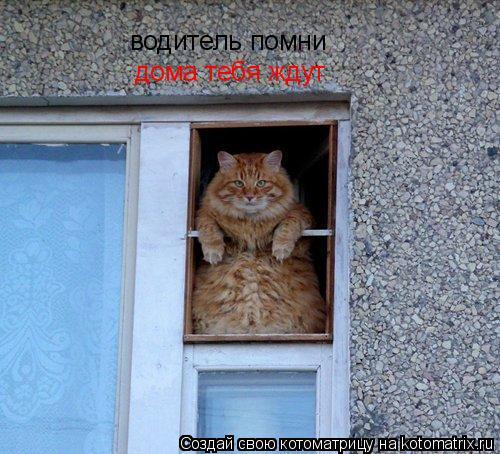 Котоматрица: водитель помни дома тебя ждут
