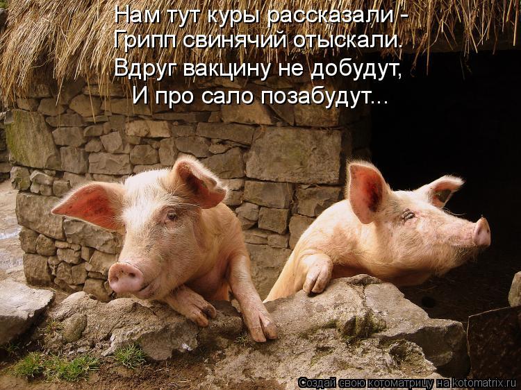 Котоматрица: Нам тут куры рассказали - Грипп свинячий отыскали. Вдруг вакцину не добудут, И про сало позабудут...
