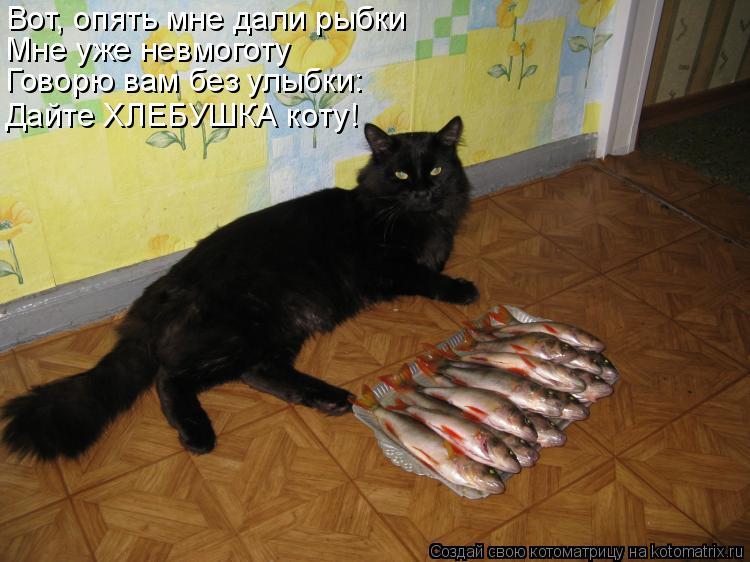 Котоматрица: Вот, опять мне дали рыбки Мне уже невмоготу Говорю вам без улыбки: Дайте ХЛЕБУШКА коту!