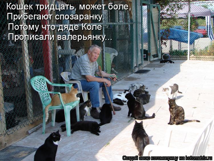 Котоматрица: Кошек тридцать, может боле, Прибегают спозаранку. Потому что дяде Коле  Прописали валерьянку...