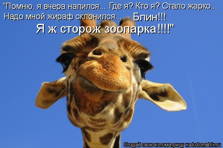 """Котоматрица: """"Помню, я вчера напился... Где я? Кто я? Стало жарко... Надо мной жираф склонился... Блин!!! Я ж сторож зоопарка!!!!"""""""