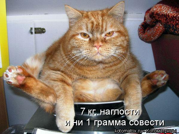 Котоматрица: 7 кг. наглости и ни 1 грамма совести