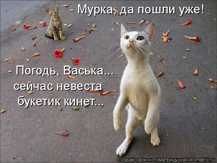 Котоматриця!)))) - Страница 4 704665