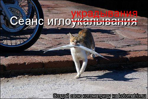 Котоматрица: Сеанс иглоукалывания __________ украдывания