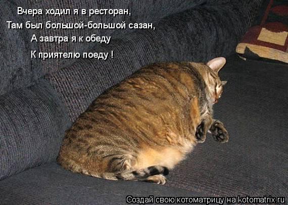 Котоматрица: Вчера ходил я в ресторан, Там был большой-большой сазан, А завтра я к обеду К приятелю поеду !