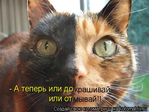 Котоматрица: - А теперь или до крашивай или от мывай!!