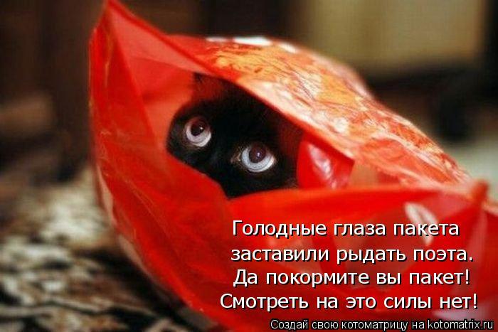 Котоматрица: Голодные глаза пакета заставили рыдать поэта. Да покормите вы пакет! Смотреть на это силы нет!