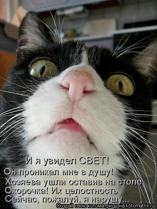 Котоматрица: Окорочка! Их целостность  Хозяева ушли оставив на столе Он проникал мне в душу! И я увидел СВЕТ! Сейчас, пожалуй, я нарушу...
