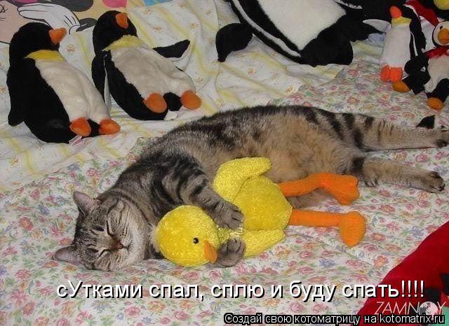 Котоматрица: сУтками спал, сплю и буду спать!!!!