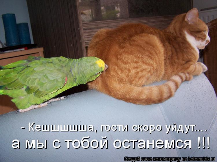 Котоматрица: - Кешшшшша, гости скоро уйдут.... а мы с тобой останемся !!!
