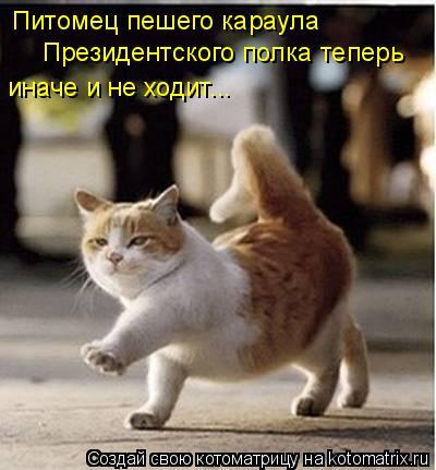 Котоматрица: Питомец пешего караула Президентского полка теперь иначе и не ходит...
