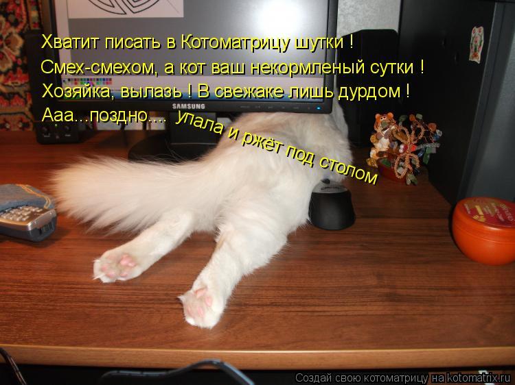 Котоматрица: Хватит писать в Котоматрицу шутки ! Смех-смехом, а кот ваш некормленый сутки ! Хозяйка, вылазь ! В свежаке лишь дурдом ! Ааа...поздно.... упала и
