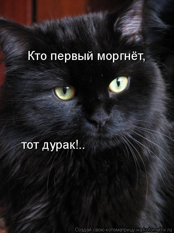 Котоматрица: Кто первый моргнёт,  тот дурак!..