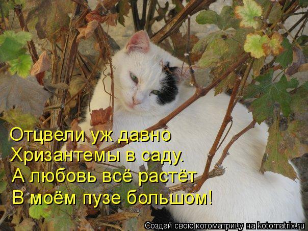 Котоматрица: Отцвели уж давно  Хризантемы в саду. А любовь всё растёт В моём пузе большом!