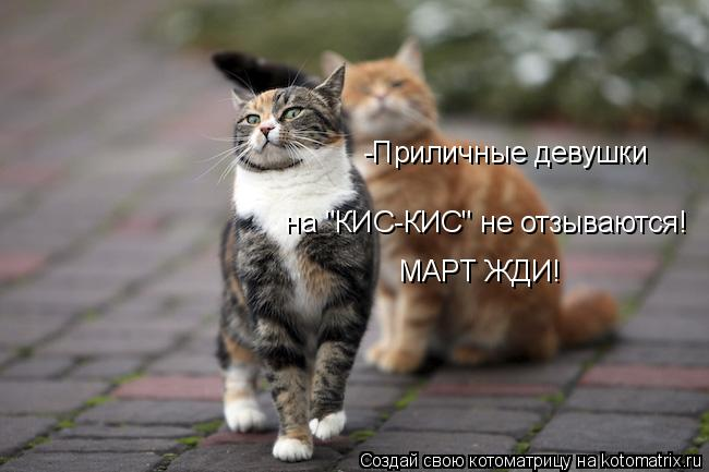 """Котоматрица: -Приличные девушки  на """"КИС-КИС"""" не отзываются!  МАРТ ЖДИ!"""