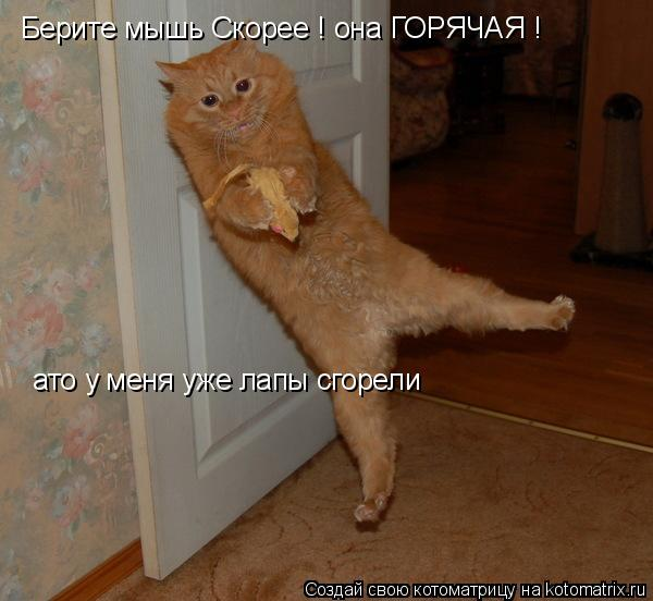 Котоматрица: Берите мышь Скорее ! она ГОРЯЧАЯ ! ато у меня уже лапы сгорели