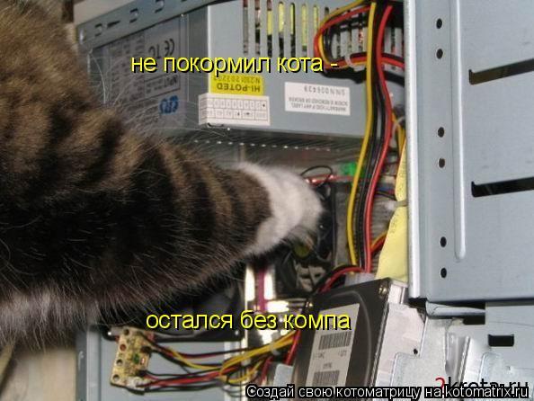 Котоматрица: не покормил кота - остался без компа