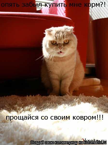 Котоматрица: опять забыл купить мне корм?! прощайся со своим ковром!!!