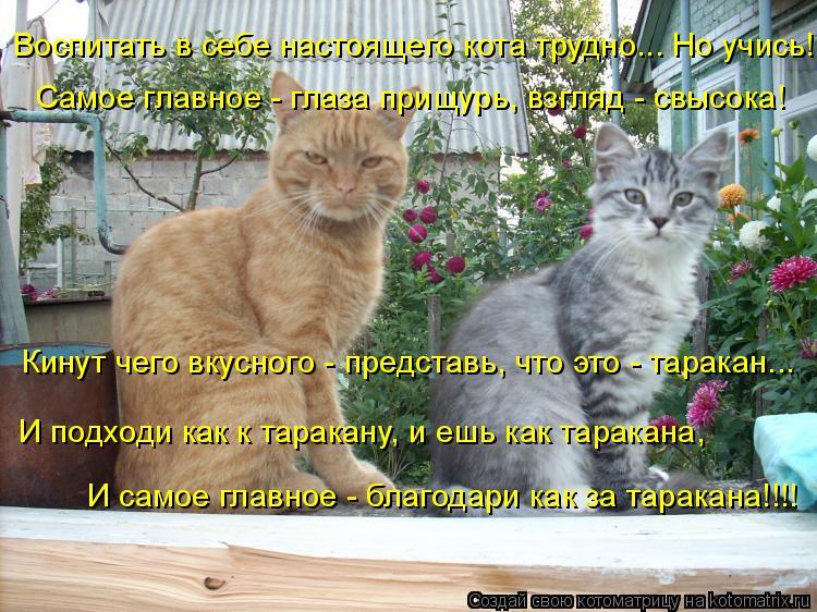 Котоматрица: Воспитать в себе настоящего кота трудно... Но учись! Самое главное - глаза прищурь, взгляд - свысока! Кинут чего вкусного - представь, что это -