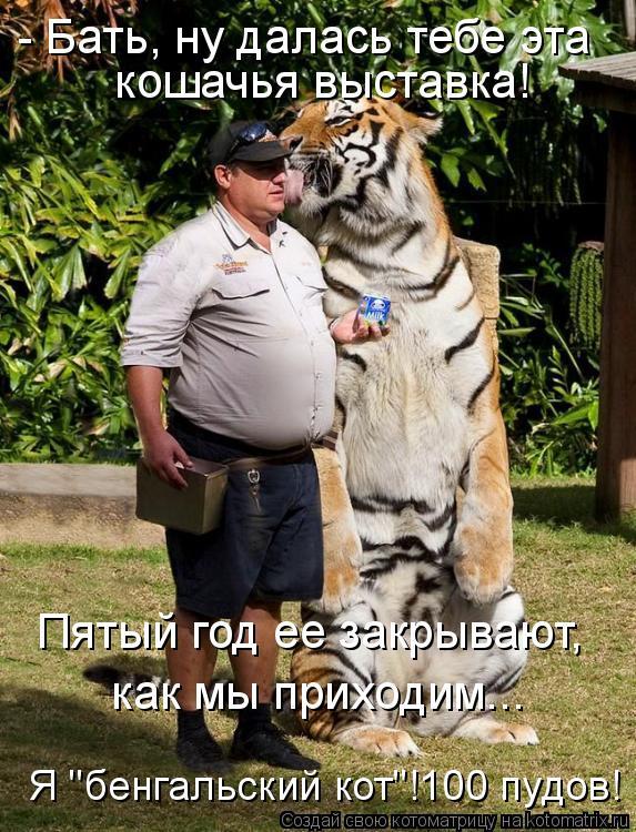 """Котоматрица: - Бать, ну далась тебе эта  кошачья выставка! Пятый год ее закрывают,  как мы приходим... Я """"бенгальский кот""""!100 пудов!"""