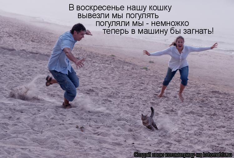Котоматрица: В воскресенье нашу кошку вывезли мы погулять погуляли мы - немножко теперь в машину бы загнать!