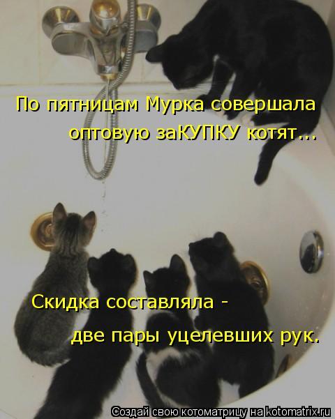Котоматрица: По пятницам Мурка совершала оптовую заКУПКУ котят...  Скидка составляла - две пары уцелевших рук.
