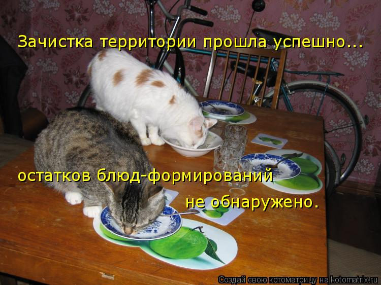 Котоматрица: Зачистка территории прошла успешно... остатков блюд-формирований  не обнаружено.