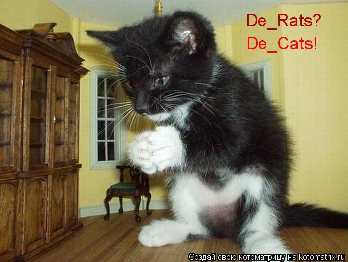 Котоматрица: De_Rats? De_Cats!