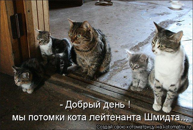 Котоматрица: мы потомки кота лейтенанта Шмидта... - Добрый день !