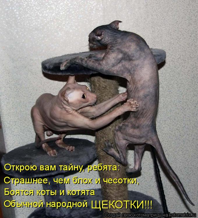 Котоматрица: Открою вам тайну, ребята: Страшнее, чем блох и чесотки, Боятся коты и котята Обычной народной ЩЕКОТКИ!!!