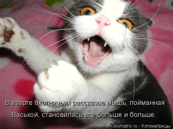 Котоматрица: В азарте охотничьих рассказов мышь, пойманная Васькой, становилась всё больше и больше.