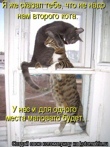 Котоматрица: Я же сказал тебе, что не надо  нам второго кота.  У нас и для одного   места маловато будет...
