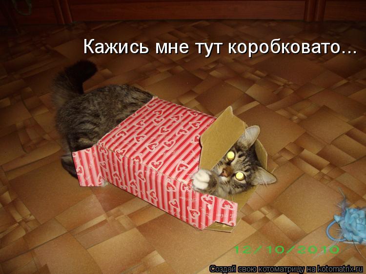 Котоматрица: Кажись мне тут коробковато...
