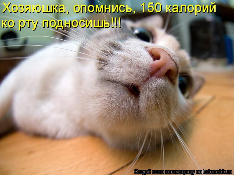 Котоматрица: Хозяюшка, опомнись, 150 калорий  ко рту подносишь!!!