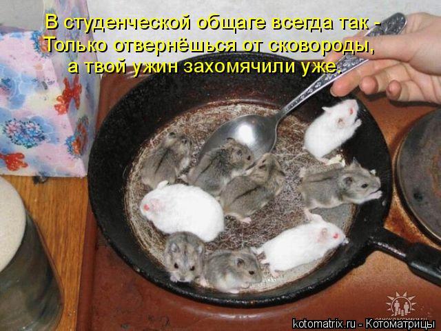 Котоматрица: В студенческой общаге всегда так - Только отвернёшься от сковороды, а твой ужин захомячили уже.