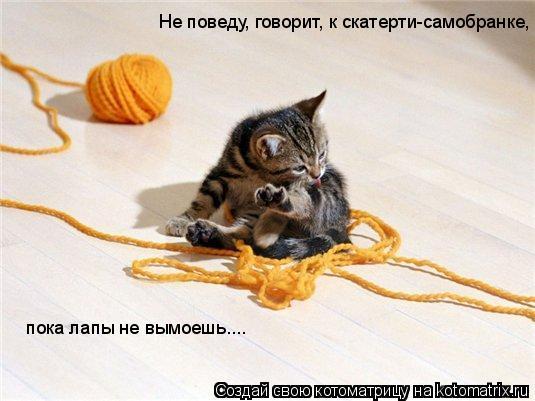 Котоматрица: Не поведу, говорит, к скатерти-самобранке,  пока лапы не вымоешь....