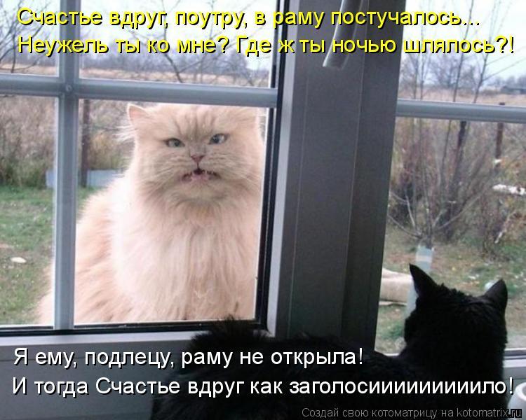 Котоматрица: Счастье вдруг, поутру, в раму постучалось... Неужель ты ко мне? Где ж ты ночью шлялось?! Я ему, подлецу, раму не открыла! И тогда Счастье вдруг к