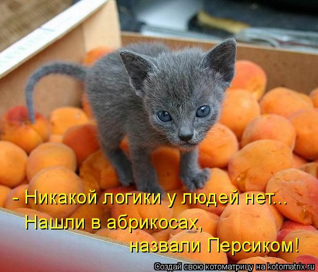 - Никакой логики у людей нет... Нашли в абрикосах, назвали Персиком!