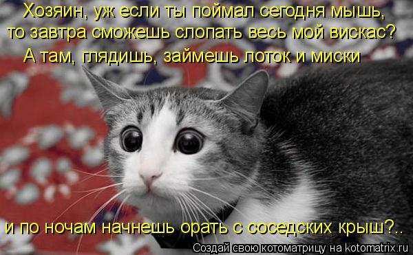 Котоматрица: Хозяин, уж если ты поймал сегодня мышь, А там, глядишь, займешь лоток и миски то завтра сможешь слопать весь мой вискас? и по ночам начнешь ор