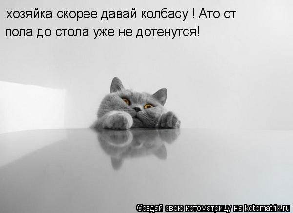 Котоматрица: хозяйка скорее давай колбасу ! Ато от  пола до стола уже не дотенутся!