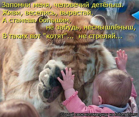 """Котоматрица: Запомни меня, человечий детёныш. Живи, веселись, вырастай. А станешь большим, не забудь, несмышлёныш, В таких вот """"котят""""...  не стреляй..."""