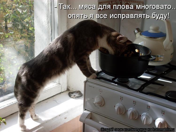 Котоматрица: - Так... мяса для плова многовато... опять я все исправлять буду!