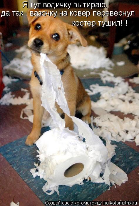 Котоматрица: Я тут водичку вытираю.. да так.. вазочку на ковер перевернул костер тушил!!!