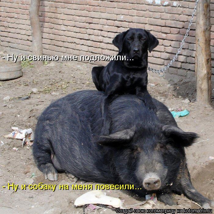Котоматрица: - Ну и свинью мне подложили... - Ну и собаку на меня повесили...