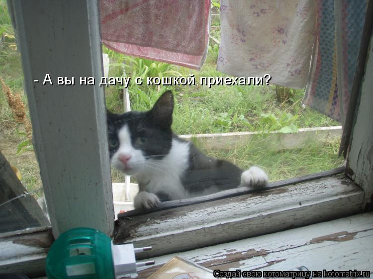 - А вы на дачу с кошкой приехали?