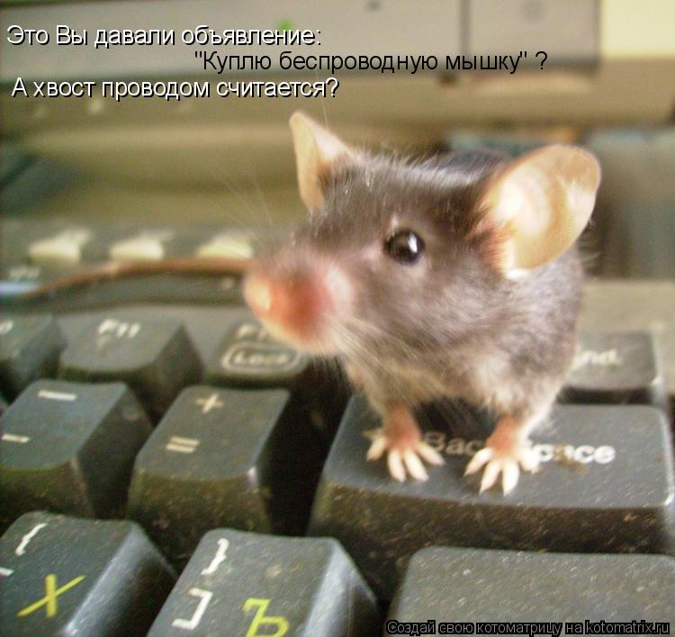 """Это Вы давали объявление: """"Куплю беспроводную мышку"""" ? А хвост проводо"""