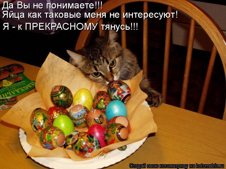 Я - к ПРЕКРАСНОМУ тянусь!!! Да Вы не понимаете!!! Яйца как таковые мен