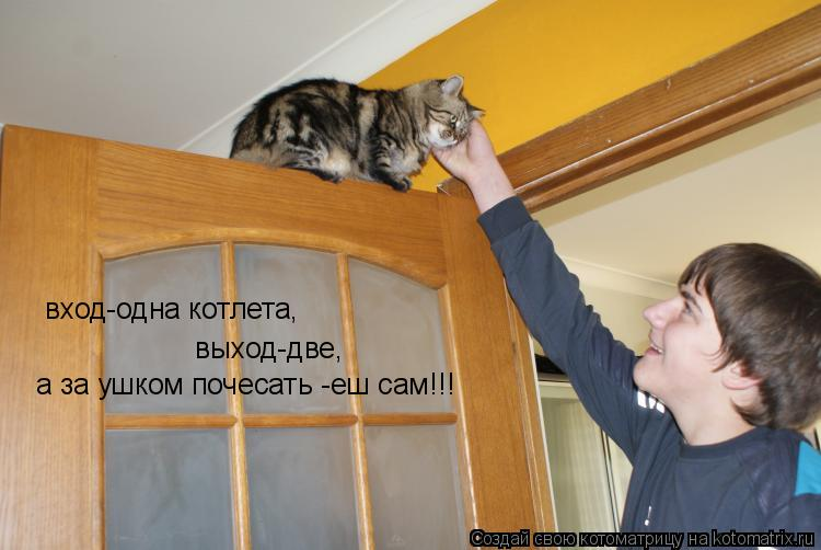 Котоматрица: вход-одна котлета, выход-две, а за ушком почесать -еш сам!!!