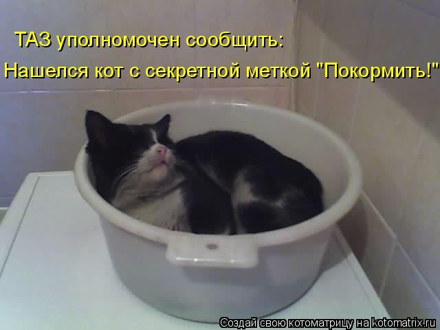"""ТАЗ уполномочен сообщить: Нашелся кот с секретной меткой """"Покормить!"""""""