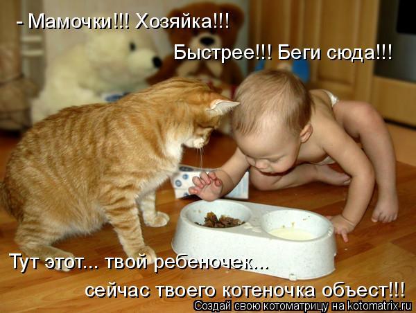 Котоматрица: - Мамочки!!! Хозяйка!!!  Быстрее!!! Беги сюда!!!  Тут этот... твой ребеночек...  сейчас твоего котеночка объест!!!